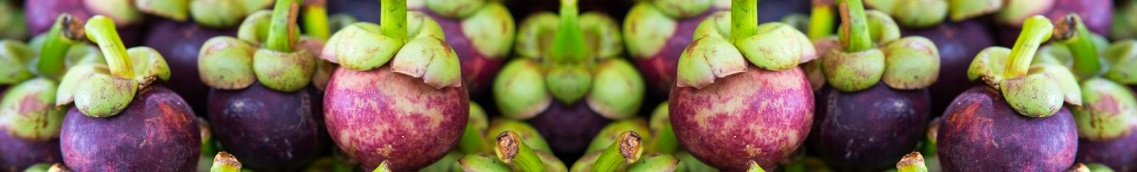 mangosteen research